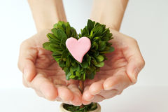 Heart that I want to convey. Royalty Free Stock Photo