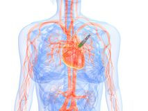 Heart injection Stock Images