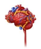 Heart Intelligence Royalty Free Stock Image