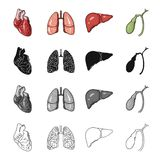Heart, internal organ, lung of a person, liver, gall bladder. Human organs set collection icons in cartoon black. Monochrome outline style vector symbol stock Royalty Free Stock Photo