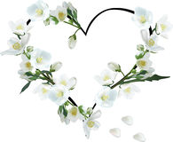 Heart from jasmine flowers isolated on white Royalty Free Stock Photos