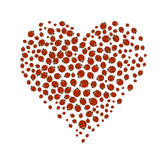 Heart of  ladybugs Royalty Free Stock Photos
