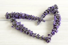 Heart of lavender Royalty Free Stock Image