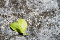 Heart leaf Stock Images