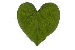 Heart Leaf Full Frame Landscape Stock Photography