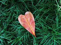 Heart leaf on green grass Royalty Free Stock Images