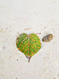 Heart Leaf. On the sand Stock Photography