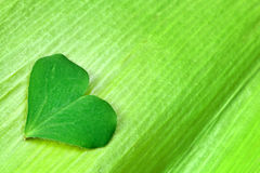 Heart on Leaf. Heart shape symbol on green leaf Royalty Free Stock Image