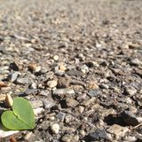 Heart Leaf. Heart-shaped leaf on rocky pavement. Love and Nature Stock Photo