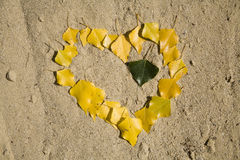 Heart from leafs on the sand Stock Images