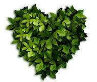 Heart in Leaves. The ornament. Green laurel Leaves background Stock Images