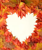 Heart of the leaves Stock Photos