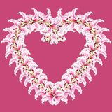 Heart of lily flowers. Floral background. Lilies. Flower pattern. Isolated on rose background. Flowers. Heart of lily flowers. Floral background. Lilies. Flower royalty free illustration