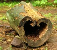 Heart log Royalty Free Stock Image