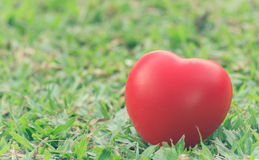 Heart of love in Valentine's day on green grass. Stock Photos