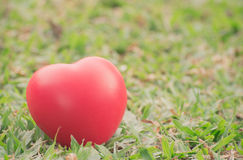 Heart of love in Valentine's day on green grass Royalty Free Stock Photo