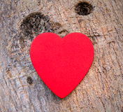 Heart of love in Valentine's day on tree Stock Photos