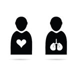 Heart and lungs in man icon vector Stock Images