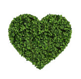 Heart made of clover Isolated on White Background Royalty Free Stock Images