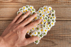 Heart made of daisies flowers in wooden background Stock Image