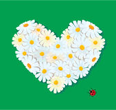 Heart is made of daisies on a green background. Royalty Free Stock Photo