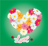 Heart is made of daisies on a green background. Royalty Free Stock Photography