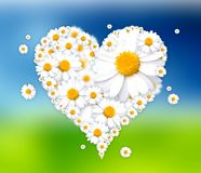 Heart made of daisies illustration. White heart made of daisies illustration Royalty Free Illustration