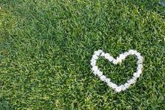 Heart made from daisy flowers Stock Photo