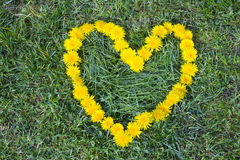 Heart made with Dandelion yellow-flowered weed flowers on the grass Stock Photo