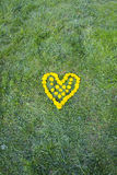 Heart made with Dandelion yellow-flowered weed flowers on the grass Stock Images