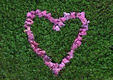 A heart made from flowers. Pink blossom of hydrangea on grass full of shamrocks Stock Photography