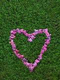 A heart made from flowers. Pink blossom of hydrangea on grass full of shamrocks Stock Photos