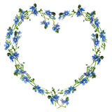 Heart made from forget-me-nots. Forget-me-nots made into the heart outline royalty free stock photography