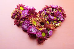 Heart made form asters. Heart from colorful asters. Still life Stock Image