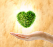 Heart made of green grass on hand Royalty Free Stock Image