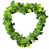 Heart made from green leave. Stock Photos