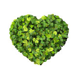 Heart made from green leave. Royalty Free Stock Photo