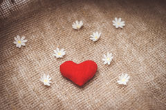Heart made with hands with flowers Stock Images