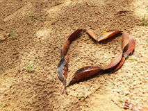 Heart made with leafs. Heart shape made with brown leafs in a sand ground Stock Photography