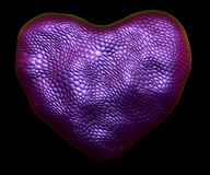 Heart made of natural purple snake skin texture isolated on black. 3d. Rendering Vector Illustration