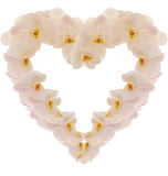 Heart made from photo orchidea Royalty Free Stock Photography