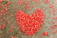 Heart made from red flower on the ground. royalty free stock photography