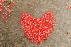 Heart made from red flower on the ground. Stock Photo