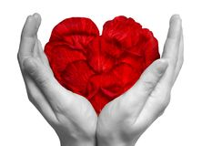 Heart made from red rose's petals in the hands Royalty Free Stock Images