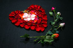 Heart made by rose petals. A full view of heart made by rose petals royalty free stock photo