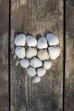 Heart made of sea shells Stock Image