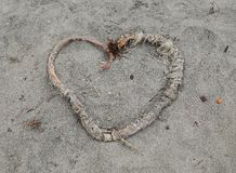 Heart. Made of sea weed on the beach in california Royalty Free Stock Photos
