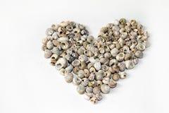 Heart made of seashells Stock Photos