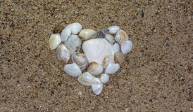 Heart made by seashells.Selective focus and High angle view. stock photo