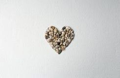 Heart made of shells Royalty Free Stock Photos